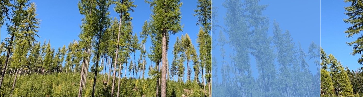 Forest management helps protect our forests and communities.
