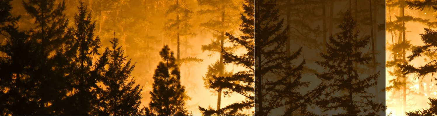 Tell Congress: Reduce wildfire risks on national forests.
