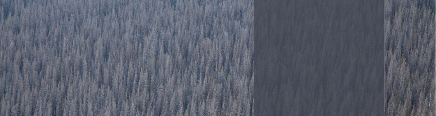 Our forests are highly vulnerable to catastrophic fire and disease, which threatens our environment and economy.